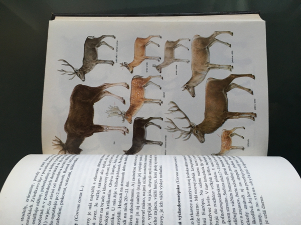 Kniha Zaklady polovnictva-A.Bakos